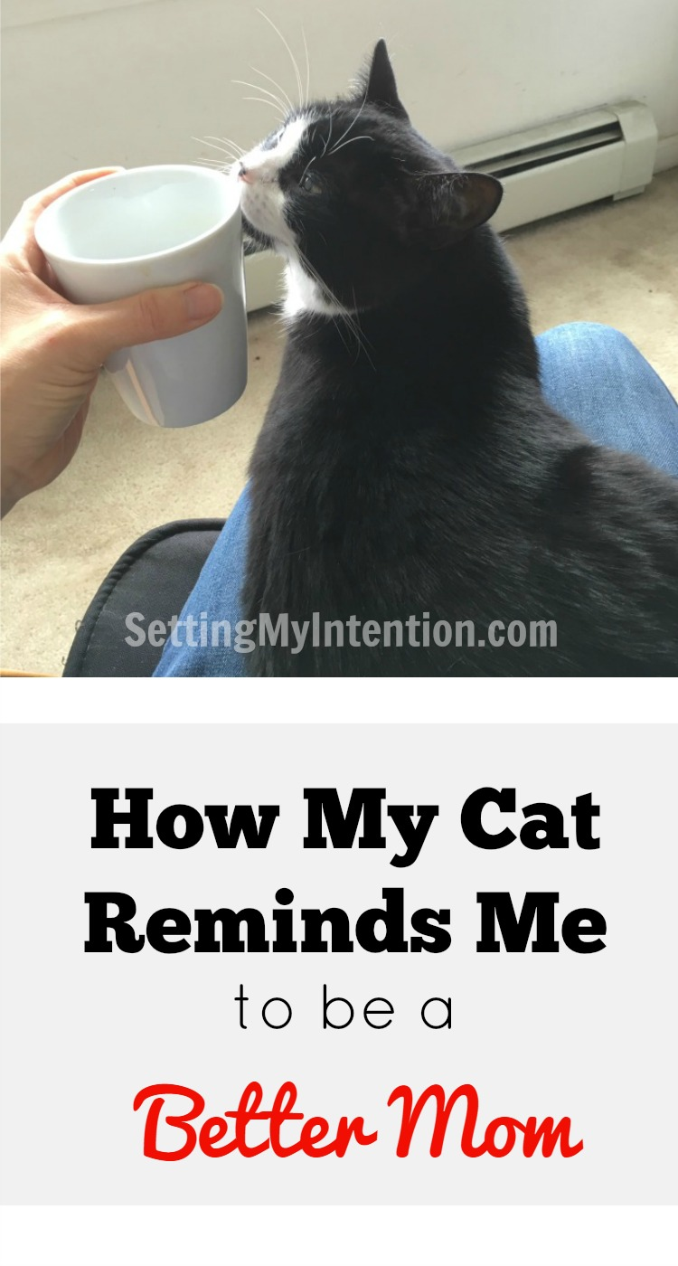 how my cat reminds me