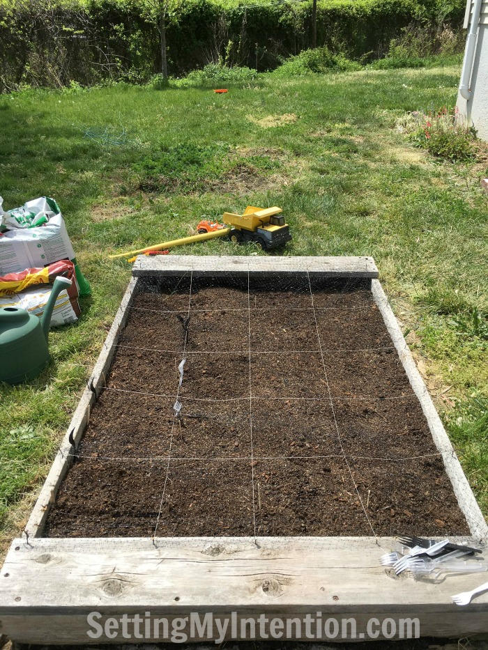 budget vegetable garden after photo
