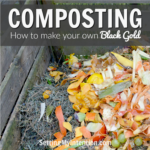 Composting for Beginners: What You Need to get Started